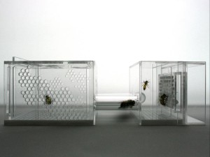 Susana Soares - Bee's