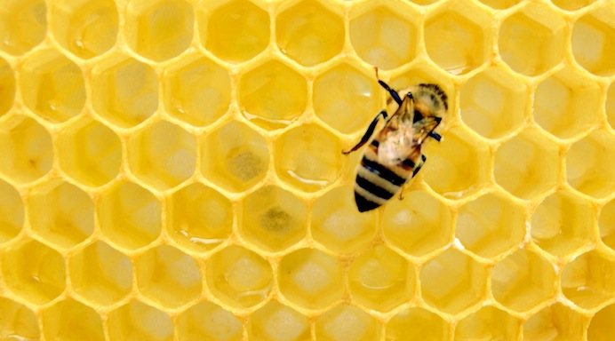 api musica