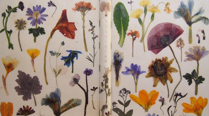 disegnare la natura - bainbridge