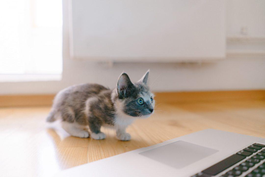 apprendimento automatico gattino